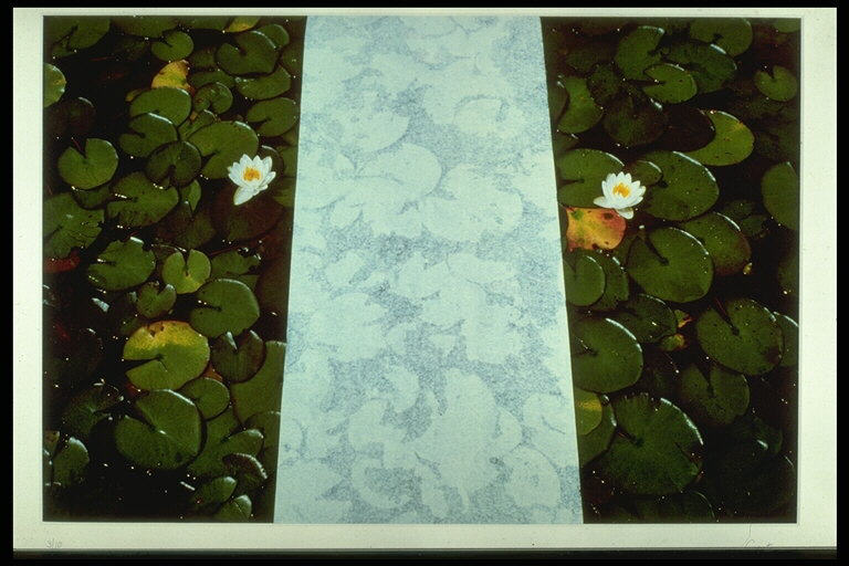 Paper and Water Lilies, Newfoundland 1982