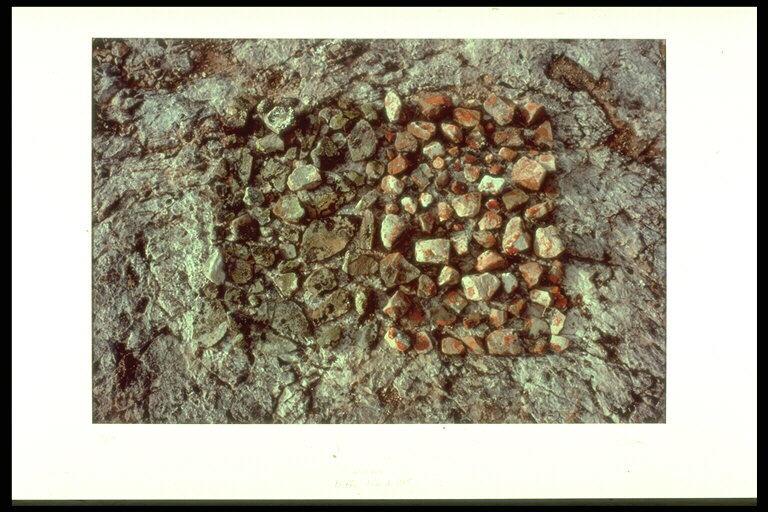 Lichens, Baffin Island 1985